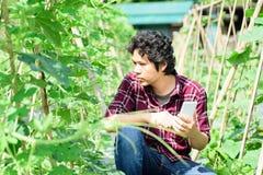 Asiatisk ung bonde som använder smartphonen i jordbruk Arkivfoton