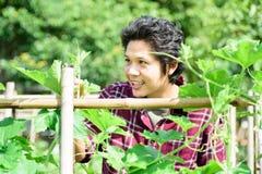 Asiatisk ung bonde som kontrollerar kvalitet av grönsaker Arkivfoto