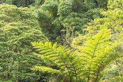 Asiatisk växt som lokaliseras i Bandung, Indonesien royaltyfri bild