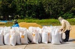 Asiatiska bönder arbeta som torkar fördelande korn under solen Royaltyfri Foto