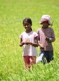 Asiatiska barn som spelar på risfält Royaltyfria Bilder