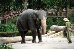 Asiatiska elefanter Royaltyfria Foton