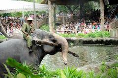Asiatiska elefanter Royaltyfri Foto