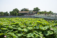 Asien China, Peking, Beihai Park, der Lotosteich, Steinbrücke Lizenzfreie Stockfotos