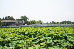 Asien China, Peking, Beihai Park, der Lotosteich, Steinbrücke Stockfotos
