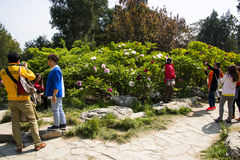 Asien China, Peking, Jingshan-Hügel-Park, Frühlingsgarten landscapeï ¼ ŒPeony-Festival Stockfotografie