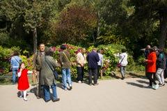 Asien China, Peking, Jingshan-Hügel-Park, Frühlingsgarten landscapeï ¼ ŒPeony-Festival Lizenzfreie Stockfotografie