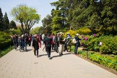 Asien China, Peking, Jingshan-Hügel-Park, Frühlingsgarten landscapeï ¼ ŒPeony-Festival Stockbilder