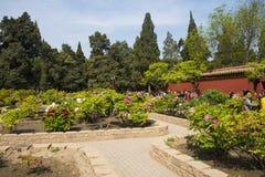 Asien China, Peking, Jingshan-Hügel-Park, Frühlingsgarten landscapeï ¼ ŒPeony-Festival Lizenzfreie Stockbilder