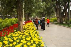 Asien China, Peking, Zhongshan Park, der Blumengarten, Tulpe Lizenzfreie Stockbilder