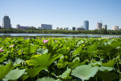 In Asien Chinese, Park Pekings, Lotosteich, Lotosteich, moderne Architektur Lizenzfreies Stockbild