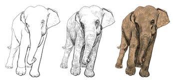 Asien elefant stock illustrationer