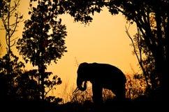 Asien elefant i skogen Arkivfoton