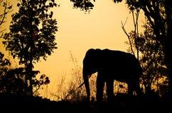 Asien elefant i skogen Arkivbild