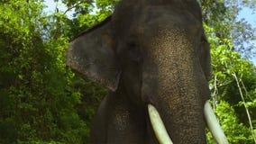 Asien elefanter i Thailand arkivbilder