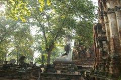 ASIEN HISTORISKA THAILAND AYUTHAYA PARKERAR TEMPLET Royaltyfri Bild