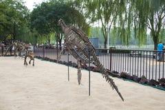 Asien Kina, Peking, Taoranting parkerar det ,Dinosaur benet Arkivfoto