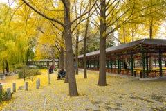 Asien Kina, Peking, Zhongshan parkerar, höstlandskap Arkivbild