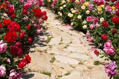 Asien kines, Peking, trädgårds- expo, blommande rosor Royaltyfri Fotografi