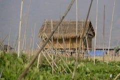 ASIEN MYANMAR NYAUNGSHWE SOM SVÄVAR TRÄDGÅRDAR royaltyfri bild