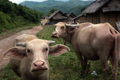 ASIEN SOUTH EAST ASIA LAOS VANG VIENG LUANG PRABANG Arkivbilder