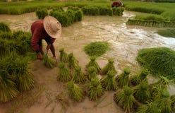 ASIEN THAILAND ISAN AMNAT CHAROEN Arkivfoto