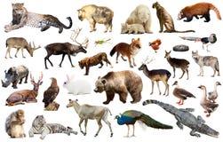 Asien-Tiere lokalisiert Stockbild