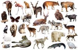 Asien-Tiere lokalisiert Lizenzfreie Stockfotos
