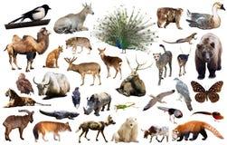 Asien-Tiere lokalisiert Lizenzfreie Stockfotografie