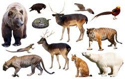 Asien-Tiere lokalisiert Stockbilder