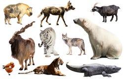 Asien-Tiere lokalisiert Stockfoto
