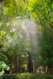 Asien trädgård med spridaren som besprutar vatten arkivbild