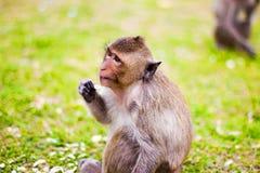 Asiento del mono en la hierba Fotos de archivo libres de regalías