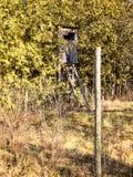 Asiento ocultado del cazador en los arbustos imagen de archivo libre de regalías