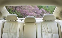 Asiento trasero del coche foto de archivo libre de regalías