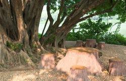 Asientos debajo de un árbol Foto de archivo libre de regalías