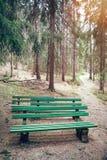 Asientos en el bosque Foto de archivo libre de regalías
