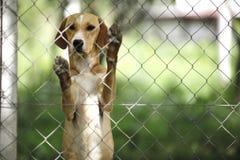 Asilo per i cani fotografia stock