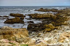 Asilomar State Marine Reserve Royalty Free Stock Images