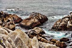 Asilomar tillstånd Marine Reserve Royaltyfri Foto