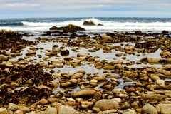 Asilomar tillstånd Marine Reserve Arkivbilder
