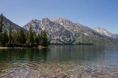 Asina del lago Fotografie Stock