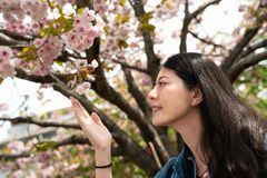 Asina female touching blossom sakura stock photo