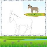 Asino di coloritura Fotografie Stock