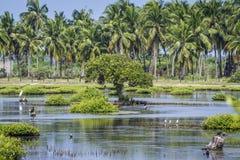 Asino di Mannar in Kalpitiya, Sri Lanka Immagini Stock Libere da Diritti