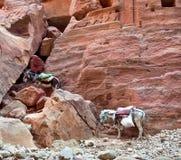 Asino e cavallo Fotografia Stock Libera da Diritti