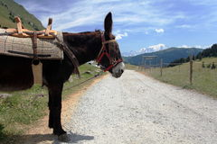 Asino sulla strada a Alpes Fotografie Stock