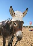 Asino un cappello Fotografia Stock