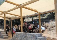 Asino-veicolo alla caverna di Zeus fotografie stock