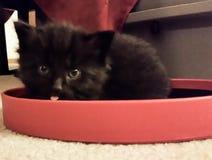Ask-överkant kattunge Arkivfoton